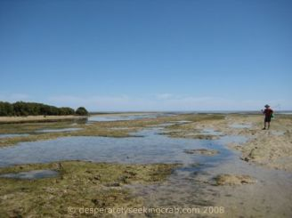 Walking in the Mud Flats