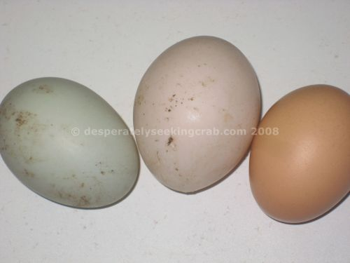 Different Duck Egg Colours - I LOVE the blue one!!